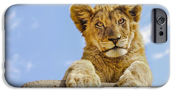Wild Animals iPhone Cases - Curious Lion Cub iPhone Case by Diane Diederich