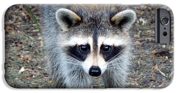 Raccoon Digital Art iPhone Cases - Curious Raccoon 1 iPhone Case by Sheri McLeroy