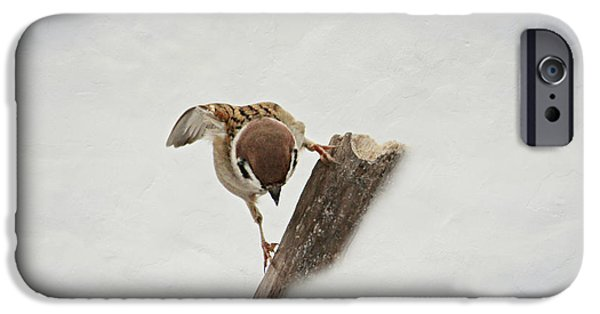 Animal Picture iPhone Cases - Curious Sparrow iPhone Case by Heike Hultsch