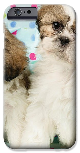 Curious Twins iPhone Case by Greg Cuddiford