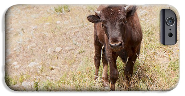 Youthful iPhone Cases - Curious Young Bison iPhone Case by John Bailey