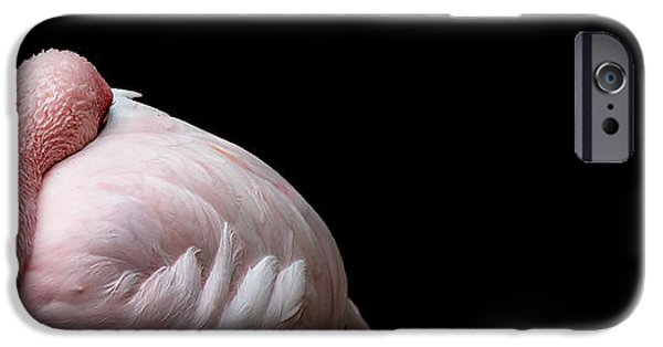 Flamingoes iPhone Cases - Curled iPhone Case by Rebecca Cozart