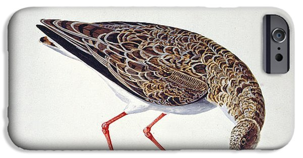 Feeding iPhone Cases - Curlew Sandpiper iPhone Case by Charles Collins