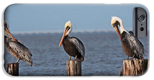 Bestfriend iPhone Cases - Curly Moe and Larry Pelicans iPhone Case by Luana K Perez