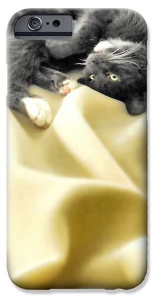 Domestic Short Hair Cat iPhone Cases - Custom Electric Blanket iPhone Case by Diana Angstadt