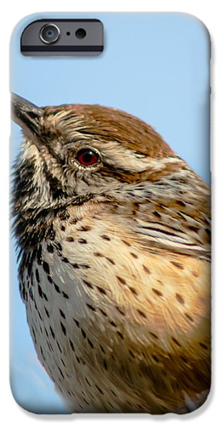 Haybale iPhone Cases - Cute Cactus Wren iPhone Case by Robert Bales
