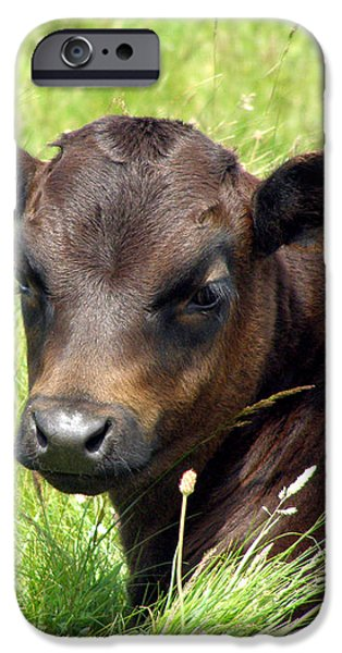 Cute Cow iPhone Case by Terri  Waters