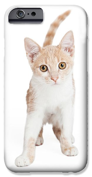 Domestic Short Hair Cat iPhone Cases - Cute Domestic Shorthair Kitten Standing  iPhone Case by Susan  Schmitz