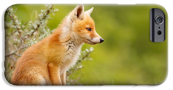 Juveniles iPhone Cases - Pinocchio - Cute Fox Kit iPhone Case by Roeselien Raimond
