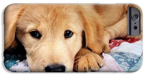 Fuzzy Golden Puppy iPhone Cases - Cute Golden Retriever Puppy Laying Down iPhone Case by Christina Rollo