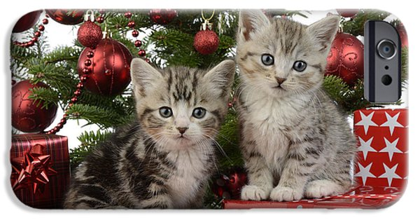 Christmas Eve iPhone Cases - Cute Kitten Xmas Presents iPhone Case by Greg Cuddiford
