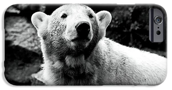 Wildlife Photographer iPhone Cases - Cute Knut iPhone Case by John Rizzuto
