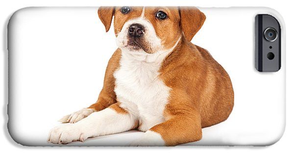 Mutt iPhone Cases - Cute Mixed Breed Puppy Laying iPhone Case by Susan  Schmitz
