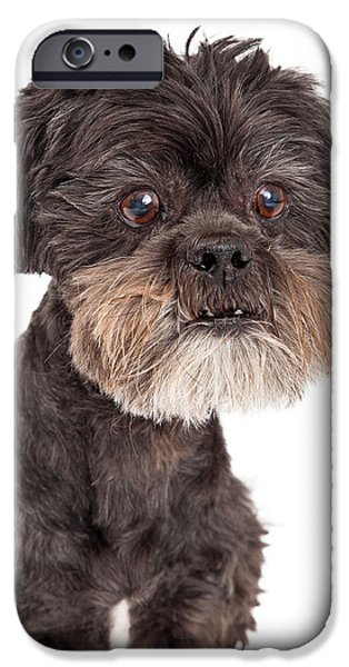 Black Dog iPhone Cases - Cute Mixed Breed Small Dog Headshot iPhone Case by Susan  Schmitz