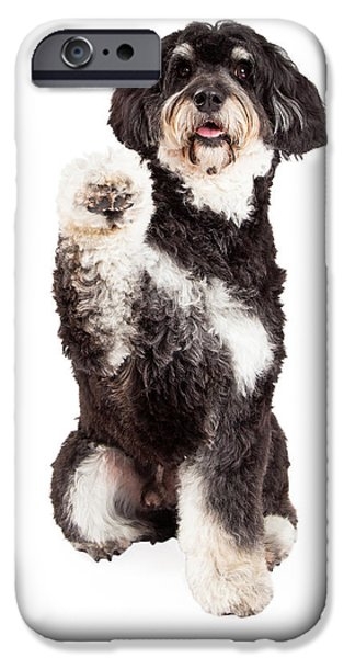 Mixed Breed iPhone Cases - Cute Poodle Mix Breed Dog Shaking Paw iPhone Case by Susan  Schmitz