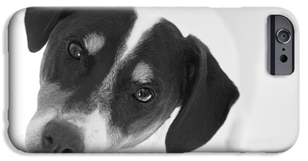 Dog Photograph Canvas iPhone Cases - Cute Pose Jack Russell Terrier iPhone Case by Natalie Kinnear