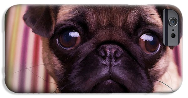 Canine Digital iPhone Cases - Cute Pug Puppy iPhone Case by Edward Fielding