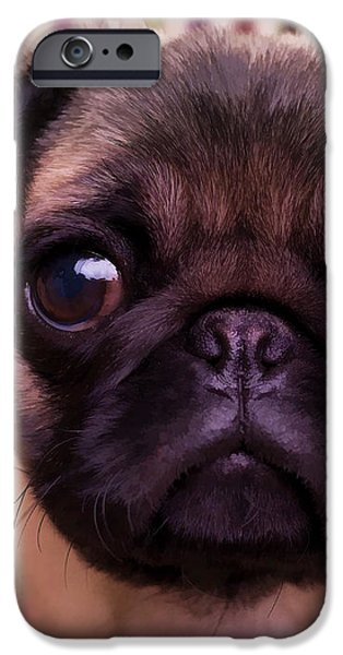 Cute Pug Puppy iPhone Case by Edward Fielding