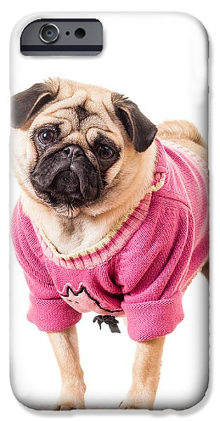 Dress iPhone Cases - Cute Pug wearing sweater iPhone Case by Edward Fielding