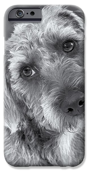 Gray Hair Digital Art iPhone Cases - Cute Pup in Black and White iPhone Case by Natalie Kinnear