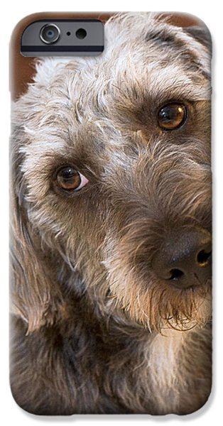 Pups Digital Art iPhone Cases - Cute Pup iPhone Case by Natalie Kinnear