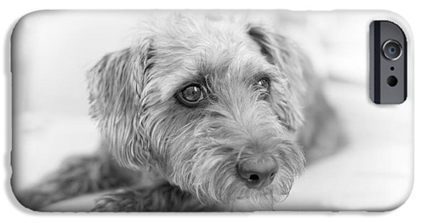 Cute Puppy Pictures Digital Art iPhone Cases - Cute Pup on Watch iPhone Case by Natalie Kinnear