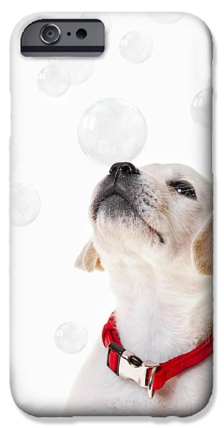 Labrador Puppy iPhone Cases - Cute puppy with a soap bubble on his nose. iPhone Case by Diane Diederich