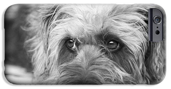 Dogs Digital Art iPhone Cases - Cute Scruffy Pup in Black and White iPhone Case by Natalie Kinnear