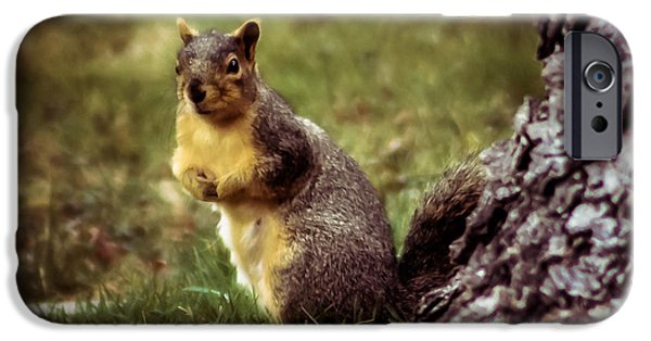 Fox Squirrel iPhone Cases - Cute Squirrel iPhone Case by Robert Bales