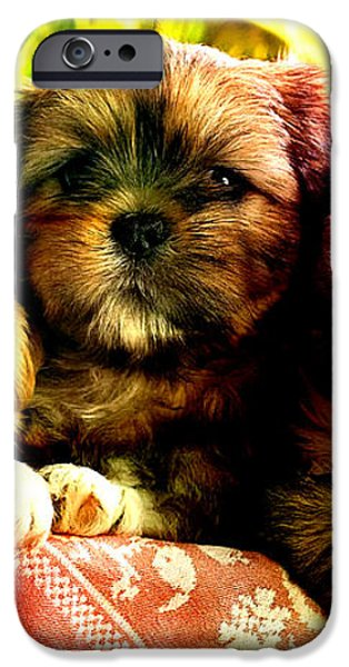 Cute Terrier Puppies iPhone Case by Marvin Blaine
