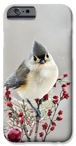 Titmouse iPhone Cases - Cute Winter Bird - Tufted Titmouse iPhone Case by Christina Rollo