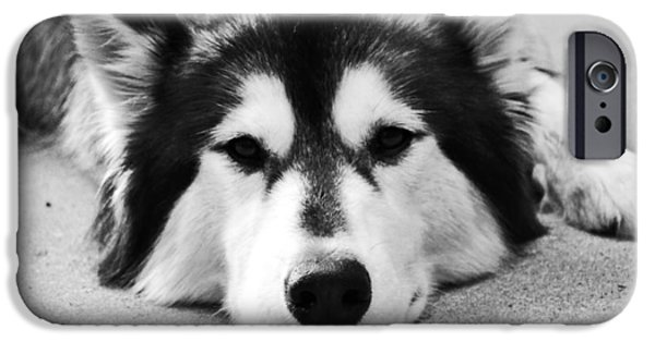 Huskies iPhone Cases - Cuteness  iPhone Case by Christina Ochsner