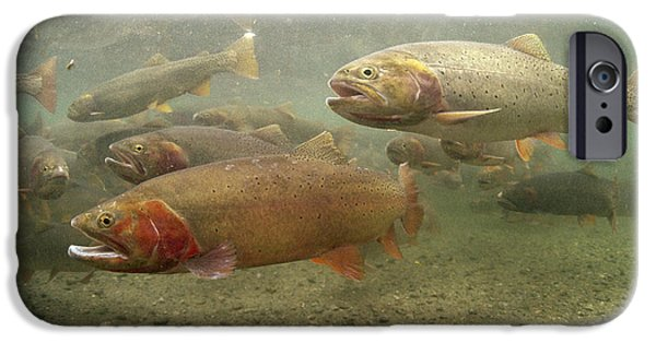 Underwater Photos iPhone Cases - Cutthroat Trout In The Spring Idaho iPhone Case by Michael Quinton