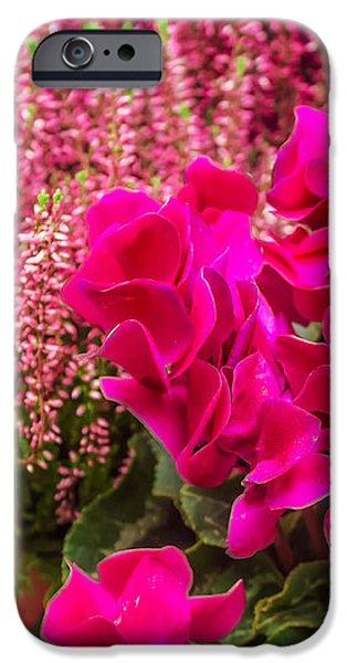 cyclamen flower iPhone Case by Dragomir Nikolov