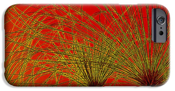 Papyrus iPhone Cases - Cyperus Papyrus Abstract iPhone Case by Ben and Raisa Gertsberg