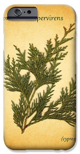 Cypress Trees iPhone Cases - Cypress iPhone Case by Mark Rogan