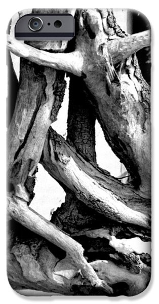 Tree Roots Mixed Media iPhone Cases - Cypress Princess iPhone Case by Gustave Kurz