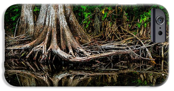 Tree Roots iPhone Cases - Cypress Roots iPhone Case by Christopher Holmes