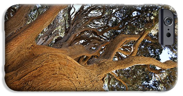 East Village iPhone Cases - Cypress tree in Iran iPhone Case by Robert Preston