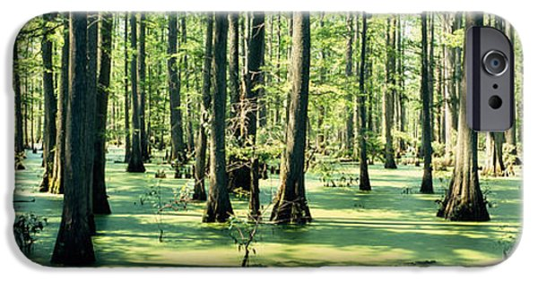 Alga iPhone Cases - Cypress Trees In A Forest, Shawnee iPhone Case by Panoramic Images