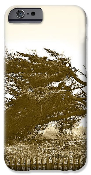 Cypress Trees in Monterey iPhone Case by Artist and Photographer Laura Wrede