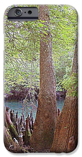 Chiefland iPhone Cases - Cyress Bank 1 iPhone Case by Sheri McLeroy