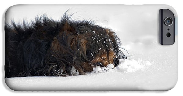 Snowbank iPhone Cases - Dachshund in the snow iPhone Case by Michal Boubin