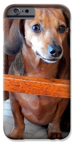 Canine Greeting Cards Digital Art iPhone Cases - Dachshund  iPhone Case by Lynn Griffin