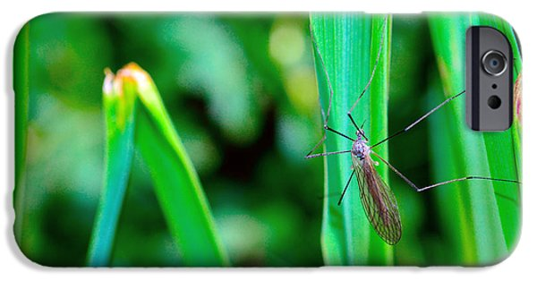 Invertebrates Mixed Media iPhone Cases - Daddy long legs  iPhone Case by Toppart Sweden