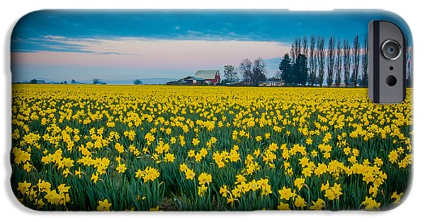 First Family iPhone Cases - Daffodil Farm iPhone Case by Puget  Exposure