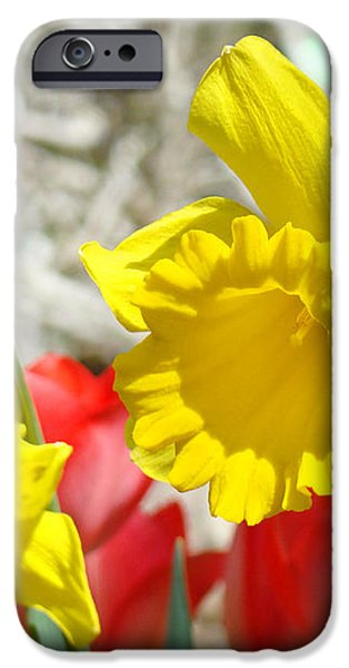 Daffodil Flowers art prints Spring Daffodils Red Tulip Garden iPhone Case by Baslee Troutman