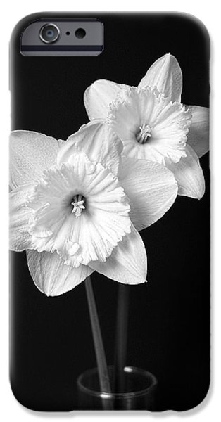 Petals iPhone Cases - Daffodil Flowers Black and White iPhone Case by Jennie Marie Schell
