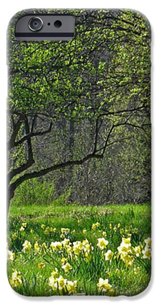 Daffodil Meadow iPhone Case by Ann Horn