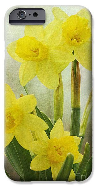 Botanical iPhone Cases - Daffodils iPhone Case by Cindi Ressler